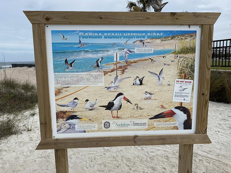 There are quite a few nesting birds at St. Augustine Beach.