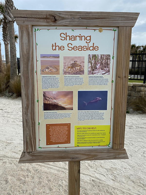 There are quite a few creatures that you might see at the seaside on St. Augustine Beach.