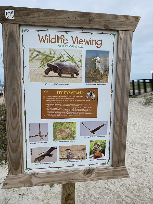 There's a lot of wildlife that you might see at St. Augustine Beach.